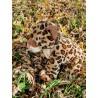 Charlie le guépard peluche de 40 cm